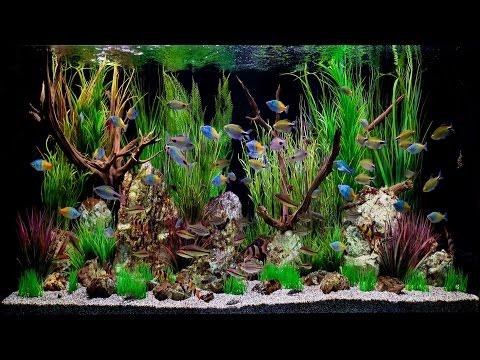 🎥 Fish Tank Artis Amsterdam☺HD♫☊ - Really Nice Aquarium