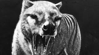 絶滅した11の動物