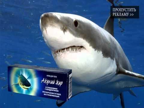 акулий жир для суставов цена в аптеке