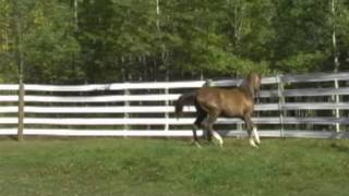 FTA's Jaide 2010 Egyptian Sired Filly (For Sale) Thumbnail