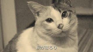 猫のミーちゃんの曲を作ってみました。映像は今まで撮りためたもので、...