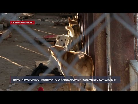 НТС Севастополь: Власти Севастополя расторгают контракт с организаторами «собачьего концлагеря»