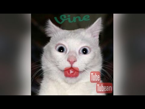 Cute Cat – Best Video Complication Most Popular Vine Cute Cat 2015 #2