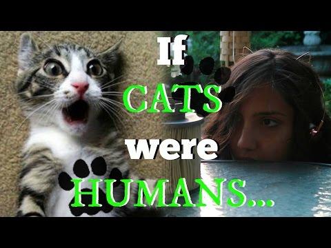 #BreakTheNet Task 4 - If Cats were Humans...