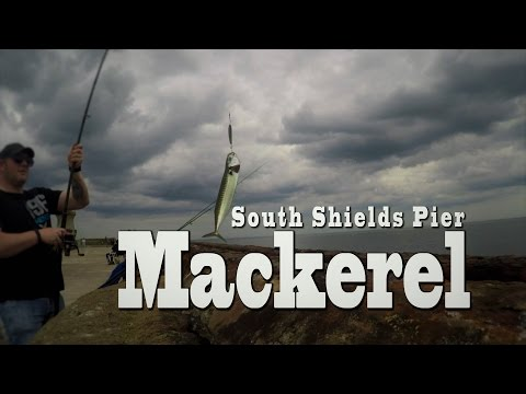 Mackerel Fishing From The Pier.