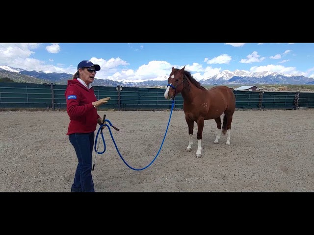 Daily Dose of Horsemanship Homework: Ground Manners #6 Ground Tying