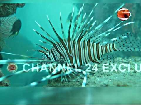 Exploring Bay of Bengal Underwater nature & Environment News @Channel 24. Part 2