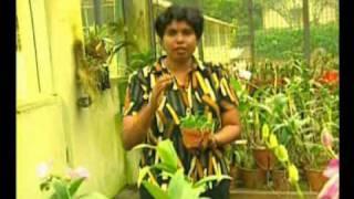orchid fertilizing