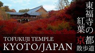 京都観光 東福寺の紅葉(Autumn leaves of Tofukuji temple in Kyoto,Japan)BGMで日本旅行 / 紅葉の名所 / 秋 / そうだ京都行こう / 京都散歩道