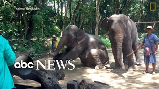 The darker side of captive exotic wildlife encounters for tourists l Nightline