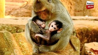 Why Elsa kidnapper Barbi from Blacky/Mother cry ask baby monkey back.