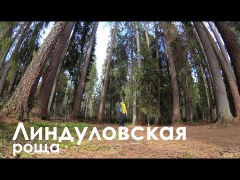 Линдуловская роща   Интересные места Ленинградской области