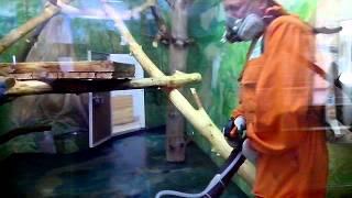 Прочь непрошенные гости!!!Уничтожение тараканов. Новосибирск.(Дезинсекция .Уничтожение тараканов в зоопарке.Безвредна для теплокровных животных. На поверхности остает..., 2016-04-21T03:26:21.000Z)