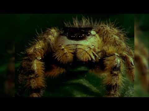 Nature's Perfect Predators: Spiders