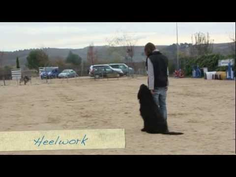 Obedience Training with Elliot the Briard