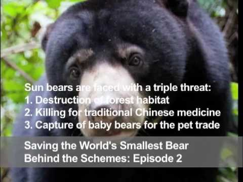 Saving the World's Smallest Bear: Behind the Schemes, Episode 2