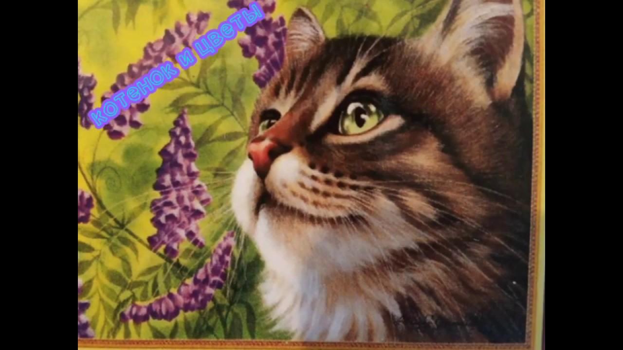 Новая картина, алмазная мозаика, котенок с цветами.🐱 - YouTube
