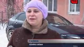 Боксер Ральф задержал грабителя..mp4