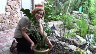 видео Комнатные растения и их пересадка