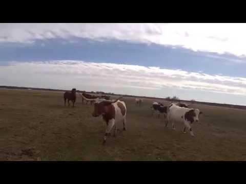 Texas Longhorn Boots