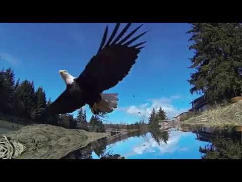Caroline Davis' Alula: Wingbeat Mp3