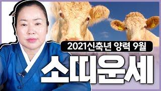 [충남용한무당 옥화보살] 2021신축년 9月 소띠 운세 | 띠별운세 소띠