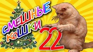 Смешные кошки 22 ● Приколы с животными зима 2015 - коты ● Funny cats vine compilation ● Part 22