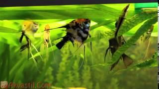 Голландский аквариум на обслуживании Аквастиль  Оформление аквариума  Аквариумистика