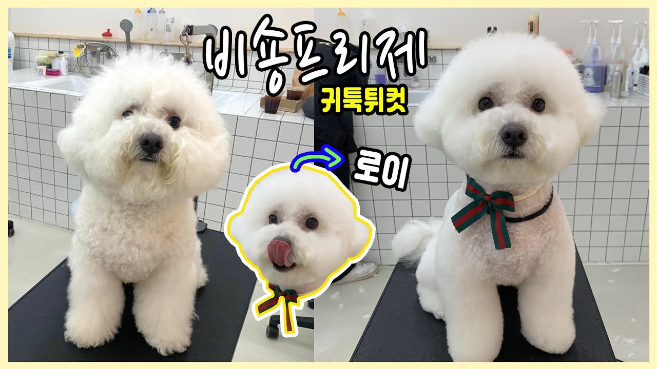 Different Dog Grooming Tips For Your Bichon Frise