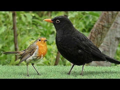 Slow Motion Birds in The Gentle Rain