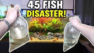 NEAR DISASTER! - Adding 45 Fish To Planted Aquarium
