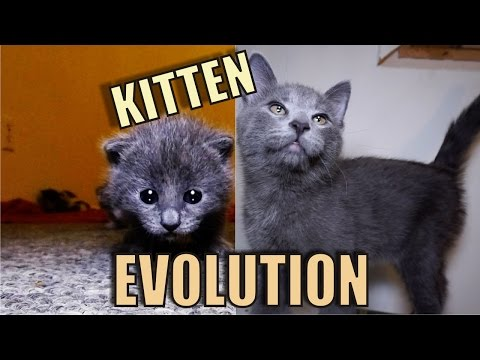 Thumbnail: Kitten Evolution - The Gibbyson