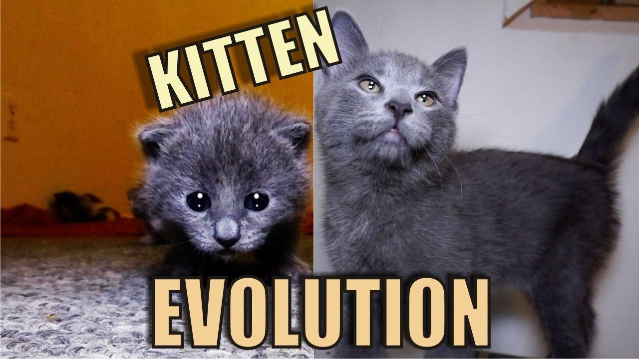 kitten-evolution-the-gibbyson