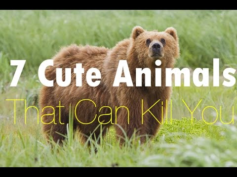 7 Cute Animals That Can Kill You - Top10Piaz - YouTube