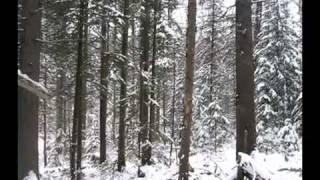 Охота на зайца с тепловизором
