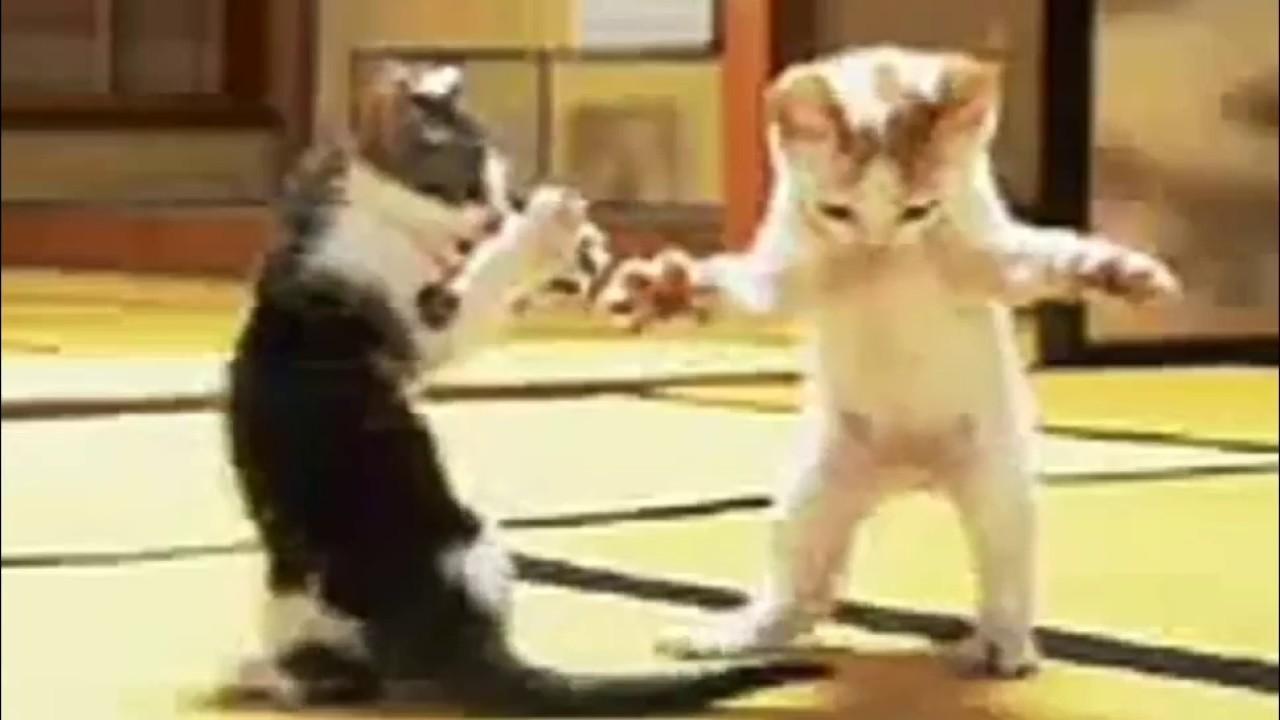 Девочка танцует с котом