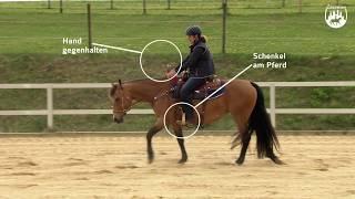 Loesdau Lessons: Grundlagen der Reitpferdeausbildung mit Ute Holm Teil 2b Takt im Schritt trainieren
