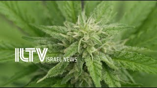 Israeli government bets big on medical cannabis sector