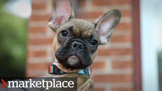 Puppies for sale: Hidden camera investigation (Marketplace)