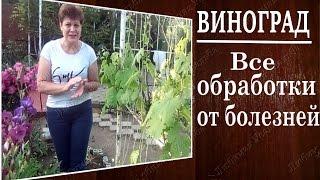 Болезни винограда . Обработки. Лучшие препараты против болезней винограда