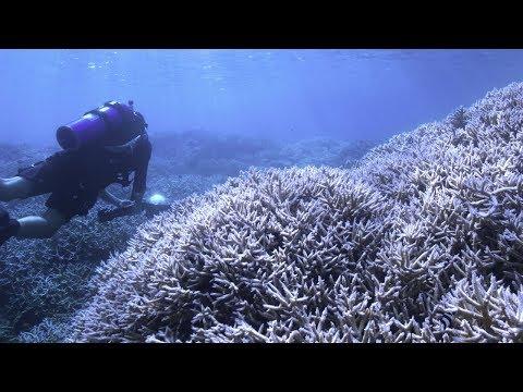 《追逐珊瑚》Chasing Coral 2017 电影预告中文字幕