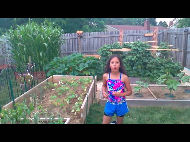 Peppers 4th July 2016