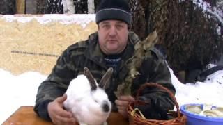 Для чего кролику УШИ кролиководство дача  кролики