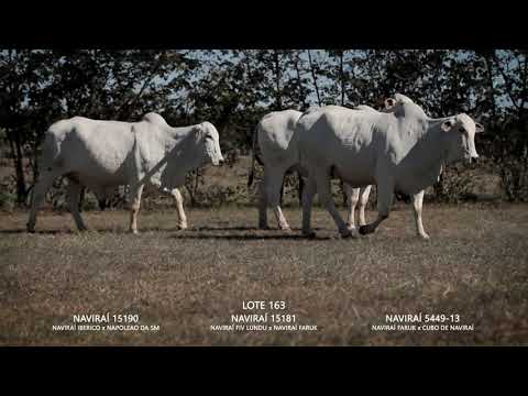 LOTE 163   CSCM 5449   CSCN 15181   CSCN 15190