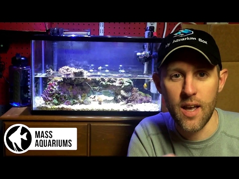 10 gallon Reef Tank: Water Changes and Maintenance Tips. Saltwater Aquarium Tips, No Skimmer