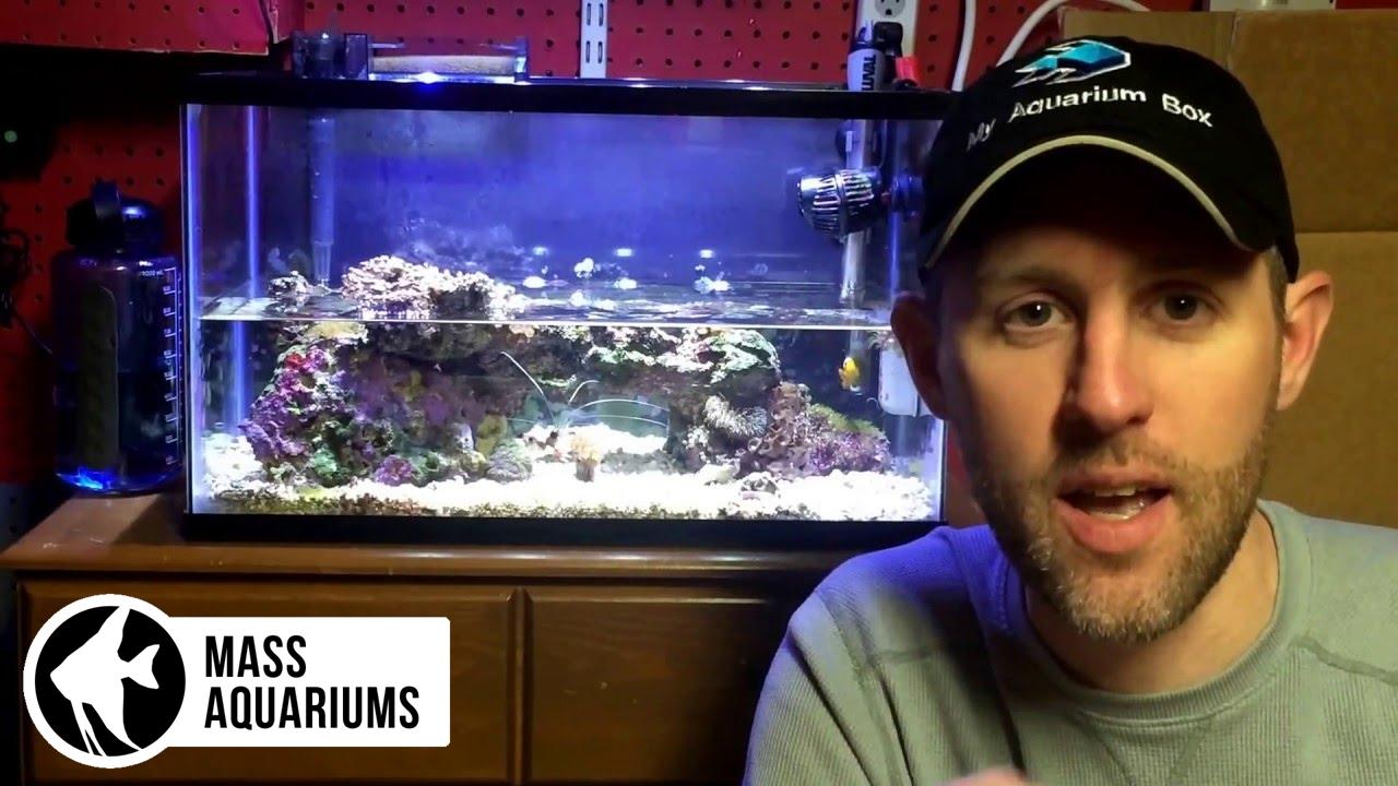10 gallon Reef Tank: Water Changes and Maintenance Tips  Saltwater Aquarium  Tips, No Skimmer