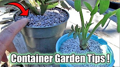Container Gardening Tips! Great Mulching Technique For Potted Plants, Plant Starts & Seedlings!