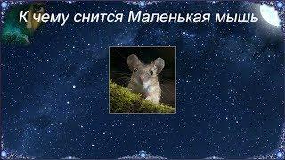 К чему снится Маленькая мышь (Сонник)