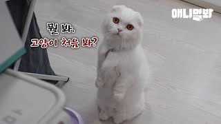 미어cat이 된 고양이ㅣA Cat Wanted To Be A Meerkat