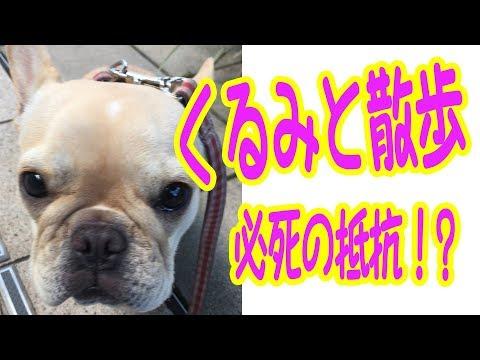 くるチューバーと散歩  〜くるみ必死の抵抗!?〜